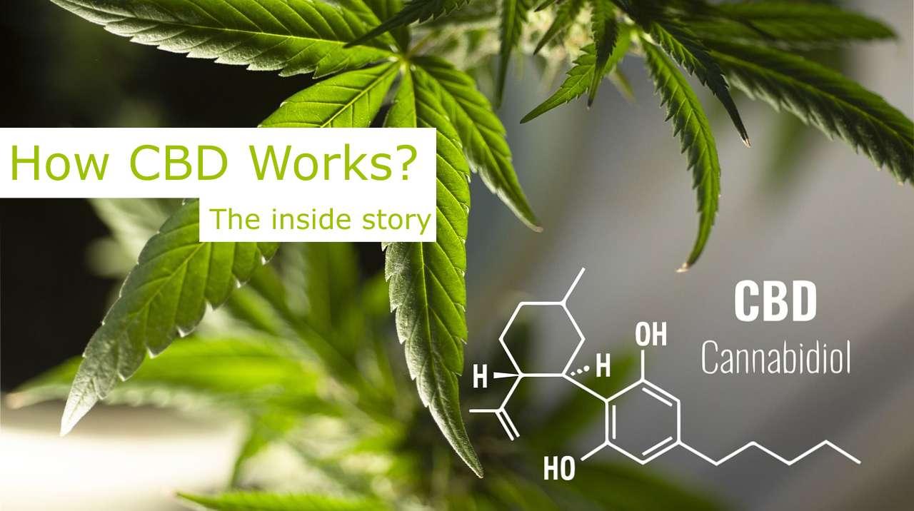 How CBD works?